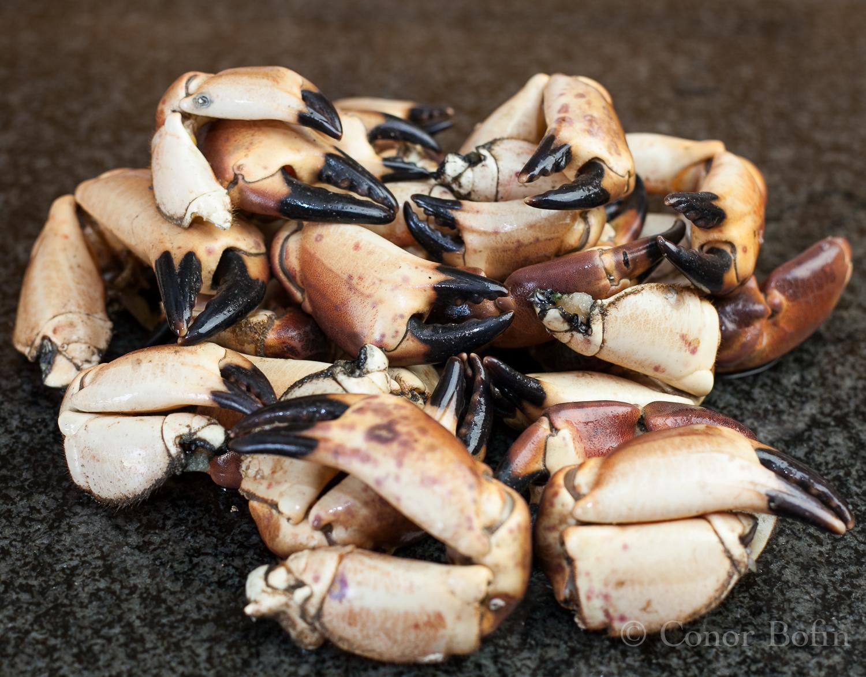 Crab and Spinach Ravioli (1 of 1)